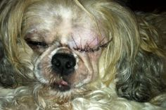 Little Yoda needs eye surgery! by Adopt Rescue Pets - GoFundMe