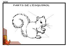 Parts de l'esquirol