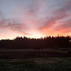 A beautiful Washington sunrise feeding the horses this morning!!!