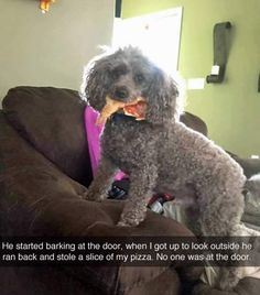 When you get schooled by a dog - Imgur Read more in: http://lovablepawsandclaws.com/