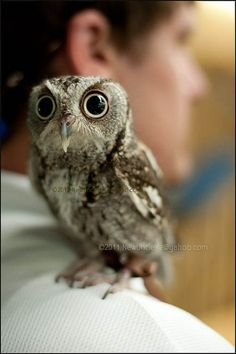 This is a very small owl
