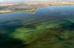 Algal blooms were documented in Florida's coastal waters as early as the 19th century. In 1998, a Florida Harmful Algal Bloom Task Force was created to address potential concerns regarding microalgae, including blue-green algae (cyanobacteria), through monitoring and investigation.  DEP continues efforts to respond to and analyze all algal bloom reports. Indian River Lagoon, Green Algae, Water Resources, Us Beaches, 19th Century, Connect, Blue Green, Coastal, Florida