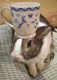 Oolong The Rabbit That Balances Things On His Head Pancakes Included
