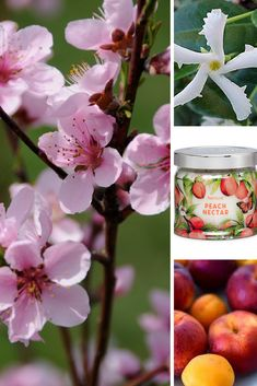 Spring Signature Scents Fragrances Collection