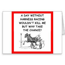 Equine Quotes, Horse Humor, Harness Racing, Funny Horses, Fun Facts, Sketches, Life, Drawings, Doodles
