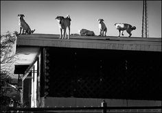 #dogs on the roof  Like,Repin,Share, Thanks!