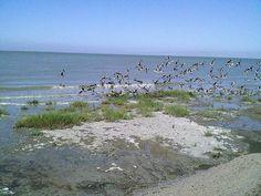 Nice Bird Camera Wireless photos