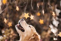 Champ, o cachorro mais feliz do mundo