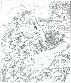 233 Best Colouring Pages Animals Images Coloring Pages Coloring