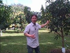 1 Acre Home Orchard in South Florida Yields Over a Thousand of Pounds of Tropical Fruit a Year Dwarf Avocado Tree, Backyard Patio, Backyard Landscaping, Avocado Farm, Grafting Fruit Trees, Wild Edibles, Tropical Garden, Sustainable Living, South Florida