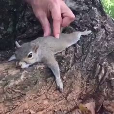 Touch is such a healing and enjoyable part of the human or human/animal connection. Just ask this squirrel. Cute Funny Animals, Cute Baby Animals, Animals And Pets, Cute Dogs, Cute Babies, Cute Animal Videos, Funny Animal Pictures, Cute Creatures, Cute Gif