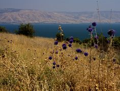 https://flic.kr/p/4X8UwM | Sea of Galilee | Looking east between the ancient villages of Korazin and Capernaum on the North Shore of the Sea of Galilee.