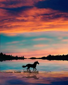 Turkish artist abdullah evindar creates fantastic surreal silhouette photo collages awesome planet on Cute Horses, Pretty Horses, Horse Love, Beautiful Horses, Animals Beautiful, Beautiful Sunset, Horse Wallpaper, Animal Wallpaper, Horse Photography