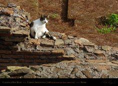 Cat on a Hot Ruin