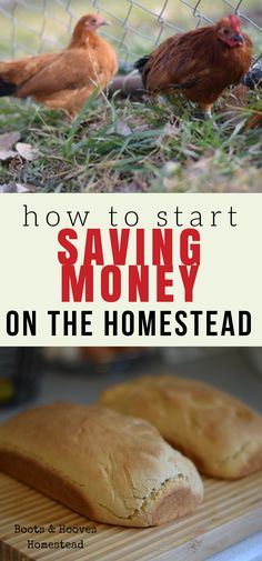 Being self sufficient is something that is very important to my family. But how do we make self sufficiency work on the homestead? 15 ways to start saving money today. #frugal #homestead #simpleliving