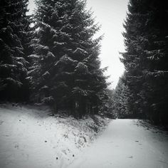morgenrothe:  #vscocam #winter #2014 #snow #forest #trees...