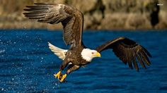 Quality Cool eagle picture (Camden Blare 1920 x 1080)