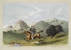 Buffalo hunt. Chasing back. From New York Public Library Digital Collections.