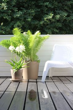 nice terrace, lot of big plants with minimal style furnised.