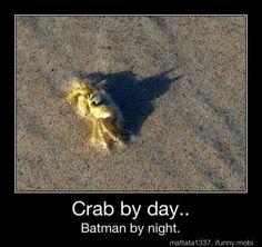 Crab by day... Batman by night. Na na na na na na na na