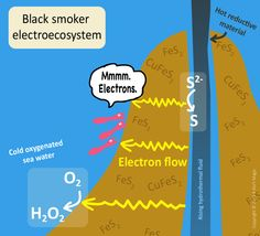 Black smokers and electroecosystems  Black smokers are deep-sea hydrothermal vents found in the ocean. Now scientists believe that they may host electroecosystems in which the primary producers use electric currents as their energy source.