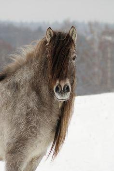 Yakut - photos - equestrian.ru