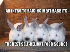Stored food can only last so long in a disaster scenario, raising meat rabbits is an easy way to raise your own self-sustaining food supply! Raising Rabbits For Meat, Meat Rabbits, Bunny Rabbits, Baby Bunnies, Homestead Survival, Camping Survival, Survival Guide, Rabbits For Sale, Future Farms