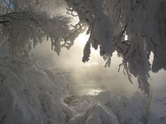 A foggy lake in winter shrouded by snow-laden trees.