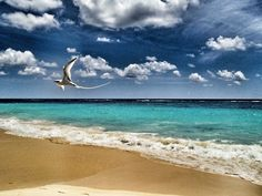 Photograph Longtail-Bermuda by Alessandra Manzotti on 500px