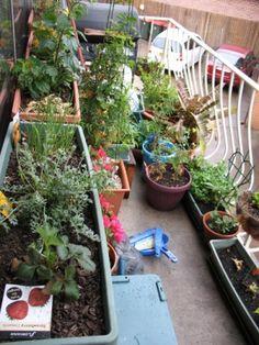 Apartment Garden :) | garden | Pinterest | Gardens, Vegetables and ...