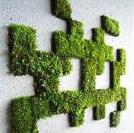 moss graffiti - Bing Images