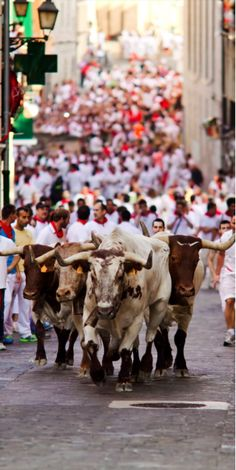 Running of the Bulls—Pamplona, Spain - The tradition which began in the early 14th-century is now a world-famous festival with a jaw-dropping sight of men clad in white with the red neckerchief and waistband, running in front of a small group the giant Toro Bravo breed of cattle.