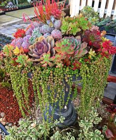 Gorgeous succulent arrangement planted up in a broken bird bath! Such a great idea to upcycle! Upcycle your broken bird bath and use it as a planter for your next succulent arrangement idea! Add gorgeous textures and color to your garden and recycle inste Succulent Arrangements, Cacti And Succulents, Planting Succulents, Planting Flowers, Succulents Wallpaper, Succulents Drawing, Propagating Succulents, Cactus Plants, Succulent Landscaping