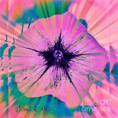 http://fineartamerica.com/featured/if-flowers-were-stars-marylee-parker.html?newartwork=true# sale#flower#stars