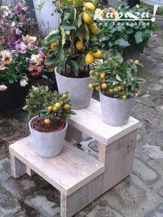 steigerhouten trapje planten