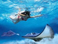 Snorkeling above a stingray in the Caribbean. #savemoney #nosmoking #ecigs #vacation #beach #swimming #swim