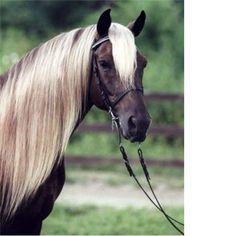 Horse / Prince Albert Stables,Prestonsburg,KY Kentucky