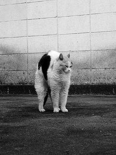 grunge cat