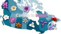 Summer is here, and that means provincial flowers are blooming from coast to coast. Do you know your provincial flower? Flowers Canada, Wildflower Tattoo, Small Tats, Weather Network, Flower Quilts, Canadian History, Container Gardening, Gardening Tips, Planting Bulbs