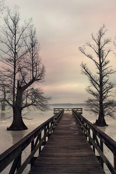foresity:  reelfoot   Brian Kaplan Reelfoot Lake in Western Tennessee has the most amazing Cyprus Trees. This morning happened to be a gorgeous morning to see the frozen lake and these magnificent trees sitting in the ice from the pier going out over the water.Really a beautiful location.