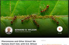 Il mondo degli odori / Pheromones and Other Stimuli We Humans Don't Get, with E.O. Wilson