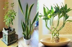 10 növény, melyek pozitív energiát teremtenek otthonodban