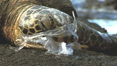 Is it Really Worth the Convenience? 6 Ways Plastic is Harming Animals, the Planet and Us