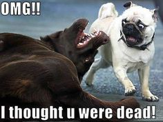 Enjoy funny animal memes that include cat memes, your favorite dog memes, funny squirrel memes, cute bear memes and a lot more that will make you laugh! Funny Dog Images, Funny Dog Captions, Funny Pictures With Captions, Funny Animal Pictures, Funny Dogs, Funny Animal Quotes, Cute Funny Animals, Hilarious Sayings, Funniest Animals