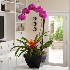 "Enjoy the gorgeous combination of orange and purple in our Mardi Gras-inspired garden. Includes one purple phalaenopsis orchid and one orange guzmania bromeliad.  Arrives top-dressed with moss in our  decorative container. Approximate height is 22"". Care instructions are included."