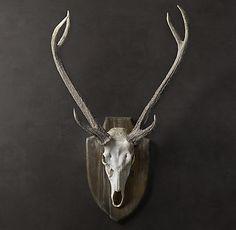 Horns & Antlers   Restoration Hardware