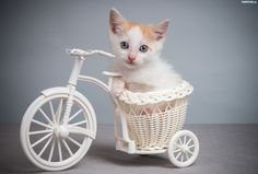 204791_kot-kociaczek-rowerek-slodkie-zwierzeta.jpg (2560×1726)