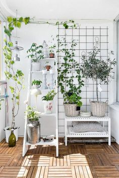 natural decoration ideas for the balcony with potted plants – Small Balcony Decor Ideas Balcony Plants, Balcony Garden, Indoor Garden, Indoor Plants, Home And Garden, Balcony Ideas, Potted Plants, Hammock Balcony, Herb Plants