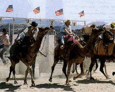 Virginia City, Nevada Camel Races