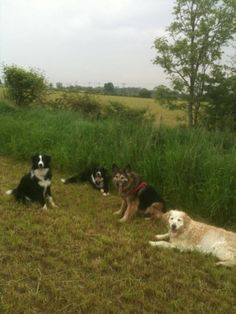 'I Want, I Want' or 'Please May I?'   Dog Star Daily